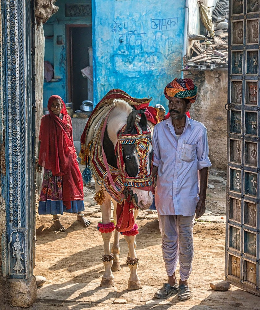 Marwari, The Horse Of India - Paula Da Silva - Crowdbooks